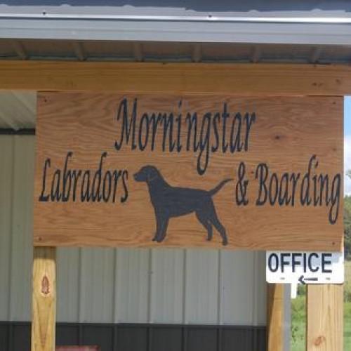 Morningstar Labradors & Boarding